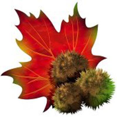 Castagna Foglia Chestnut Leaf Chataigne Feuille